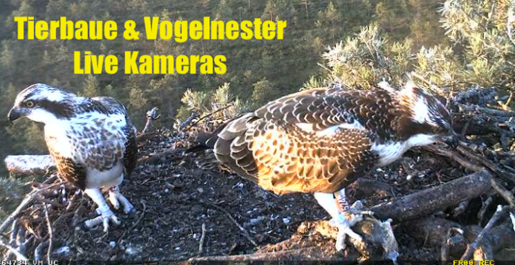 Tierbaue & Vogelnester Webcams